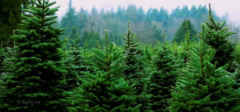 röta i träd